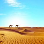 camel dream meaning