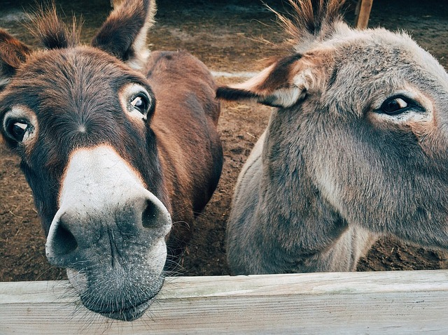 donkey dream meaning