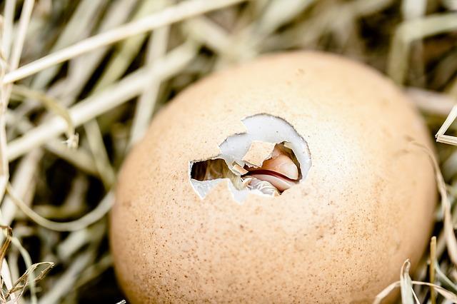 egg dream