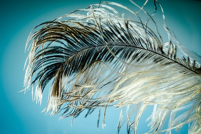 feather dream meaning