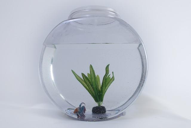fish tank dream