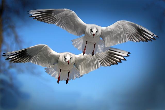 seagull dream