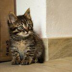 kitten born dream
