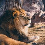 lion dream meaning