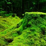 green moss dream