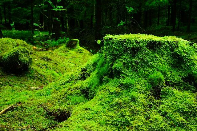 green moss dream