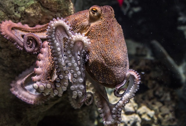 octopus dream meaning