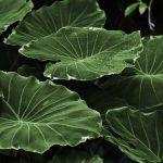 plant dream