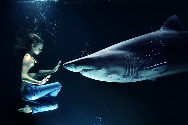 shark dream