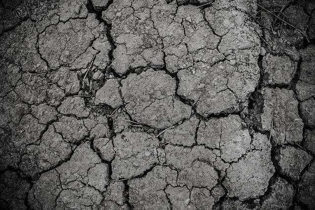 soil dream