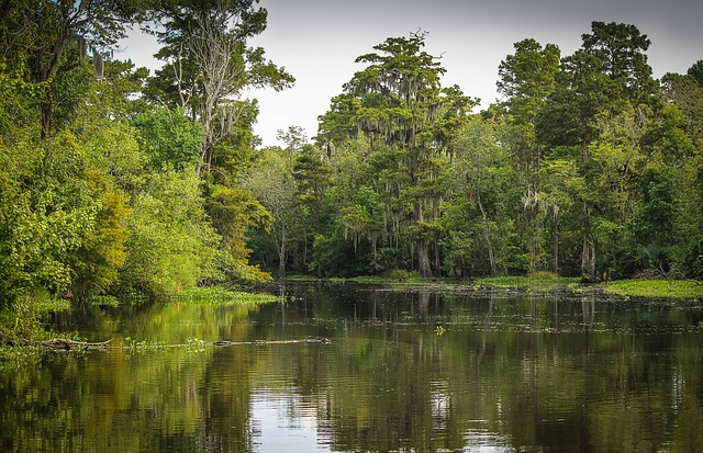 swamp dream