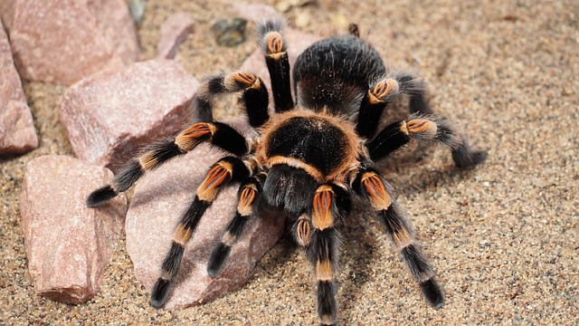 tarantula dream meaning