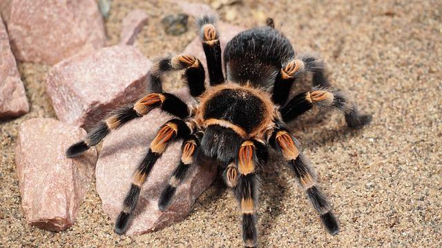 tarantula dream meaning