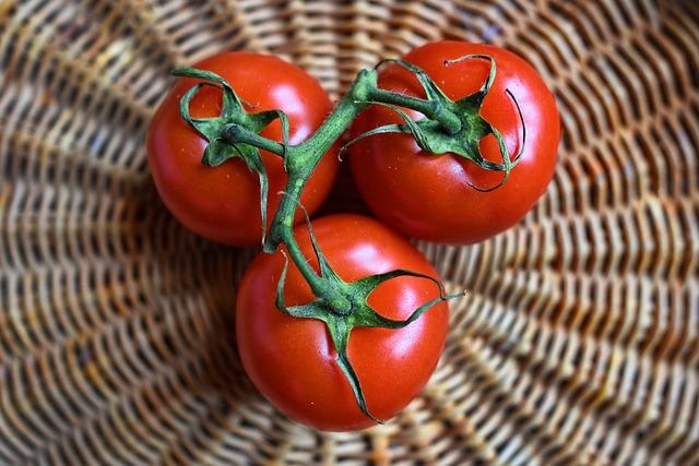 tomato dream