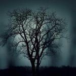 tree dream