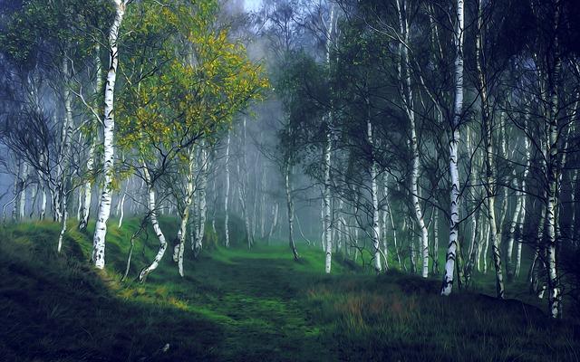 birch tree dream