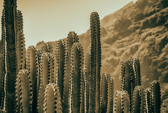 cactus dream meaning