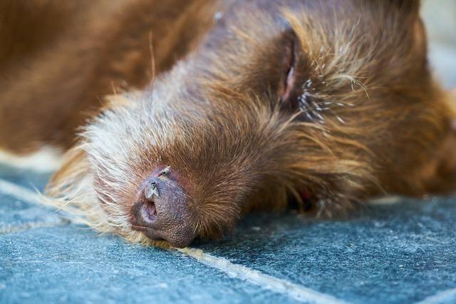dream dead dog