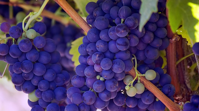 grape dream meaning