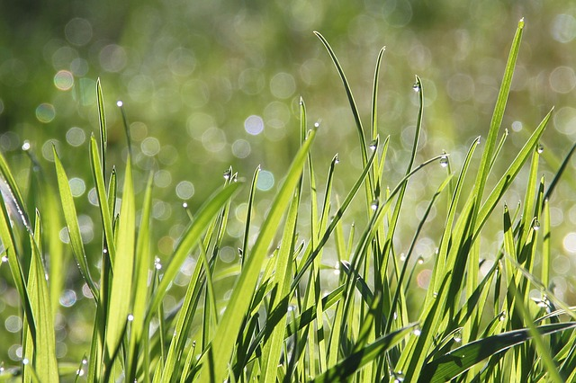 grass dream meaning
