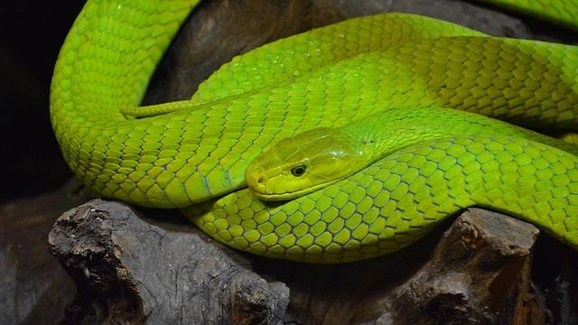 dream green snakes