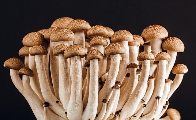 mushroom dream meaning