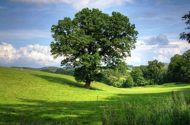 oak dream meaning