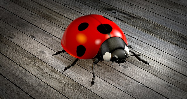 What does it mean when you dream of beetles?