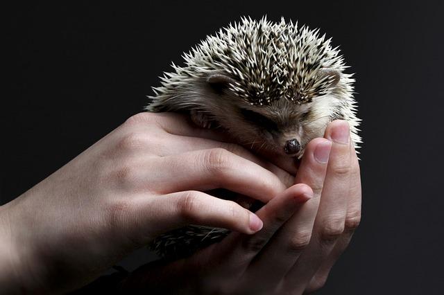 hedgehog dream meaning