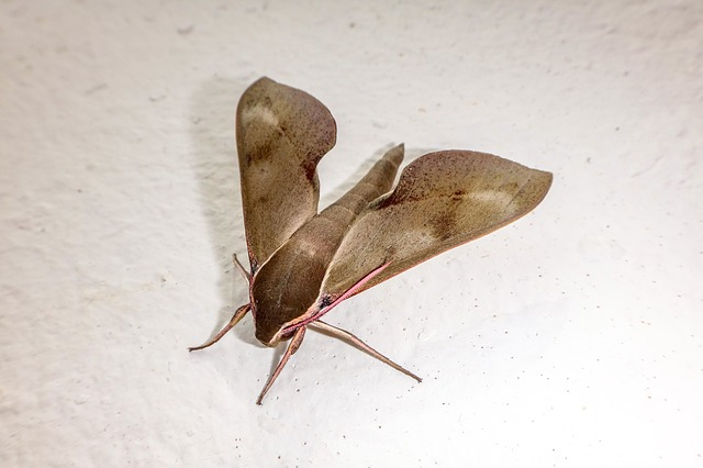 moth dream meaning