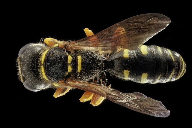 wasp sting dream meaning