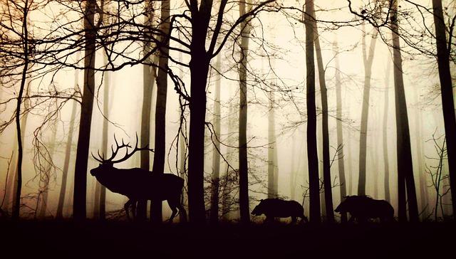 dream of wild animals in my house