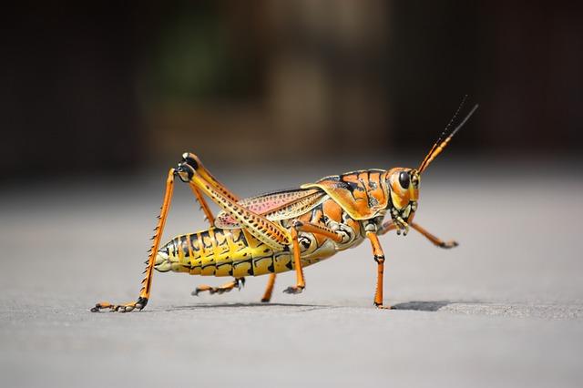 Grasshopper dream meaning