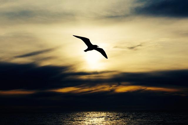flying birds dream meaning