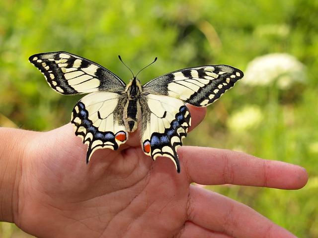 butterfly landing on head dream