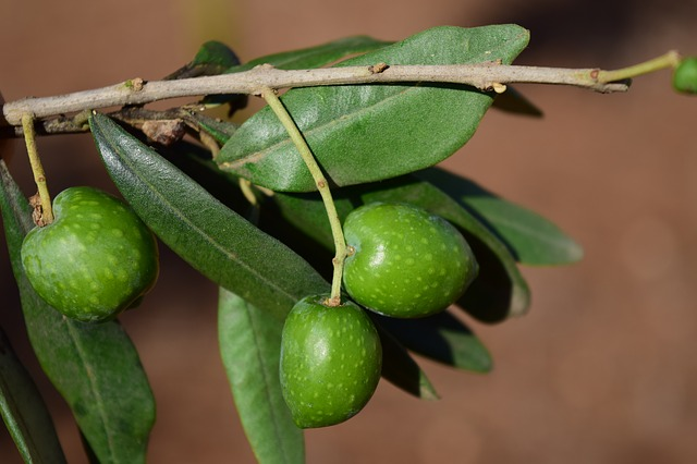 olive dream meaning
