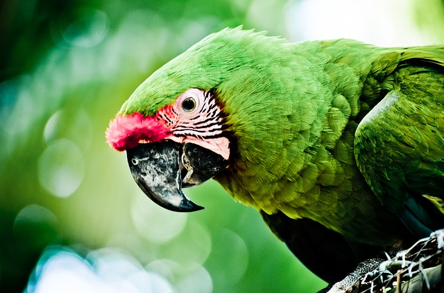 seeing parrot in dream means