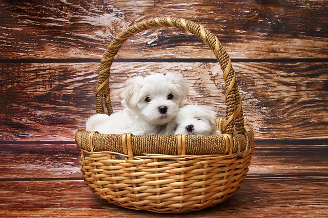 white puppy dream interpretation