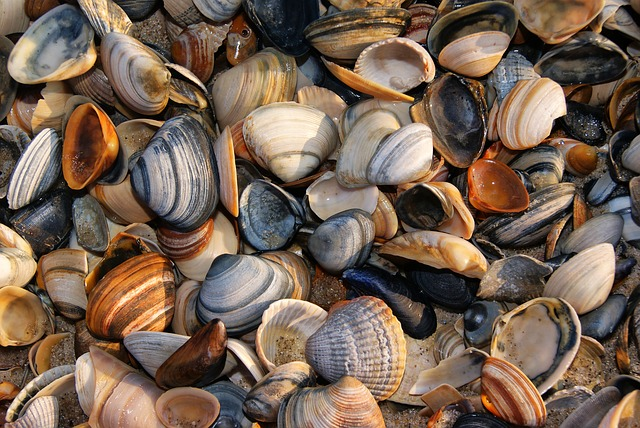 shellfish dream meaning clams