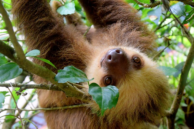sloth dream meaning
